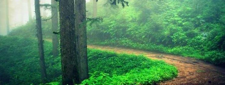 kaudia forest
